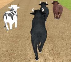 لعبة سباق الثيران